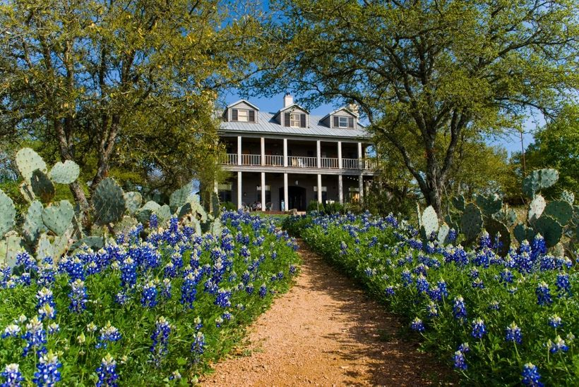 Bluebonnets at Sage Hill Inn