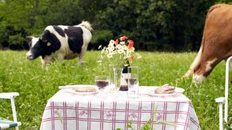 Picnic table in middle of field of cows