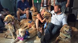 Comfort Dogs Provide Emotional Support After Orlando