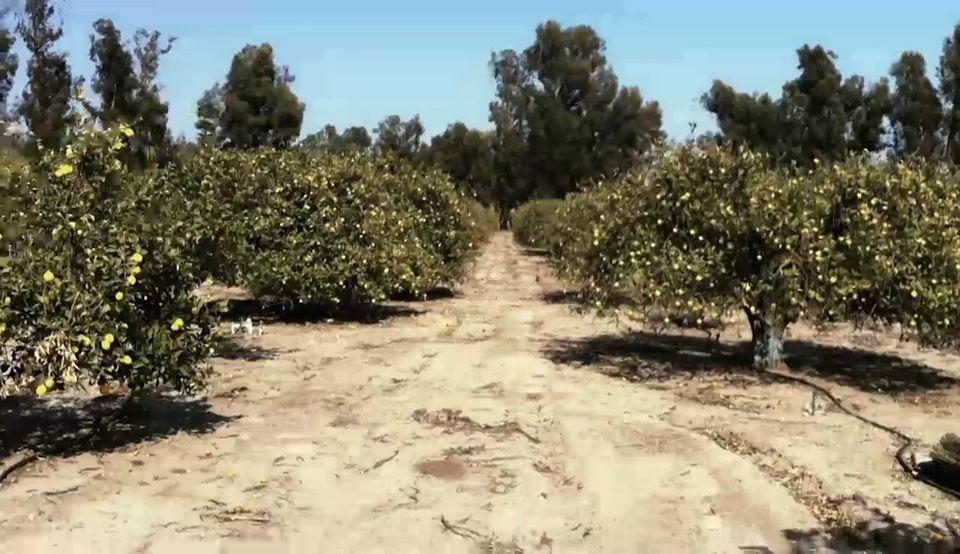 Day 1 on Apricot Lane Farms