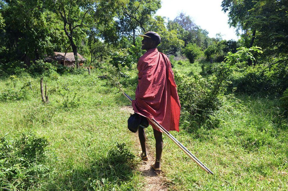 Kiodomwita, 60, saunters down a trickle of a trail to his wife Malinja's boma on his way back from market day in Namb