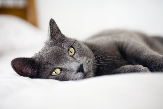 Cats Can Actually Understand Physics And This Is Why They Will Eventually Rule Us