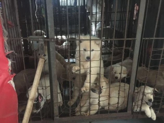 Dozens of dogs and cats were rescued from a Chinese slaughterhouse just days ahead of