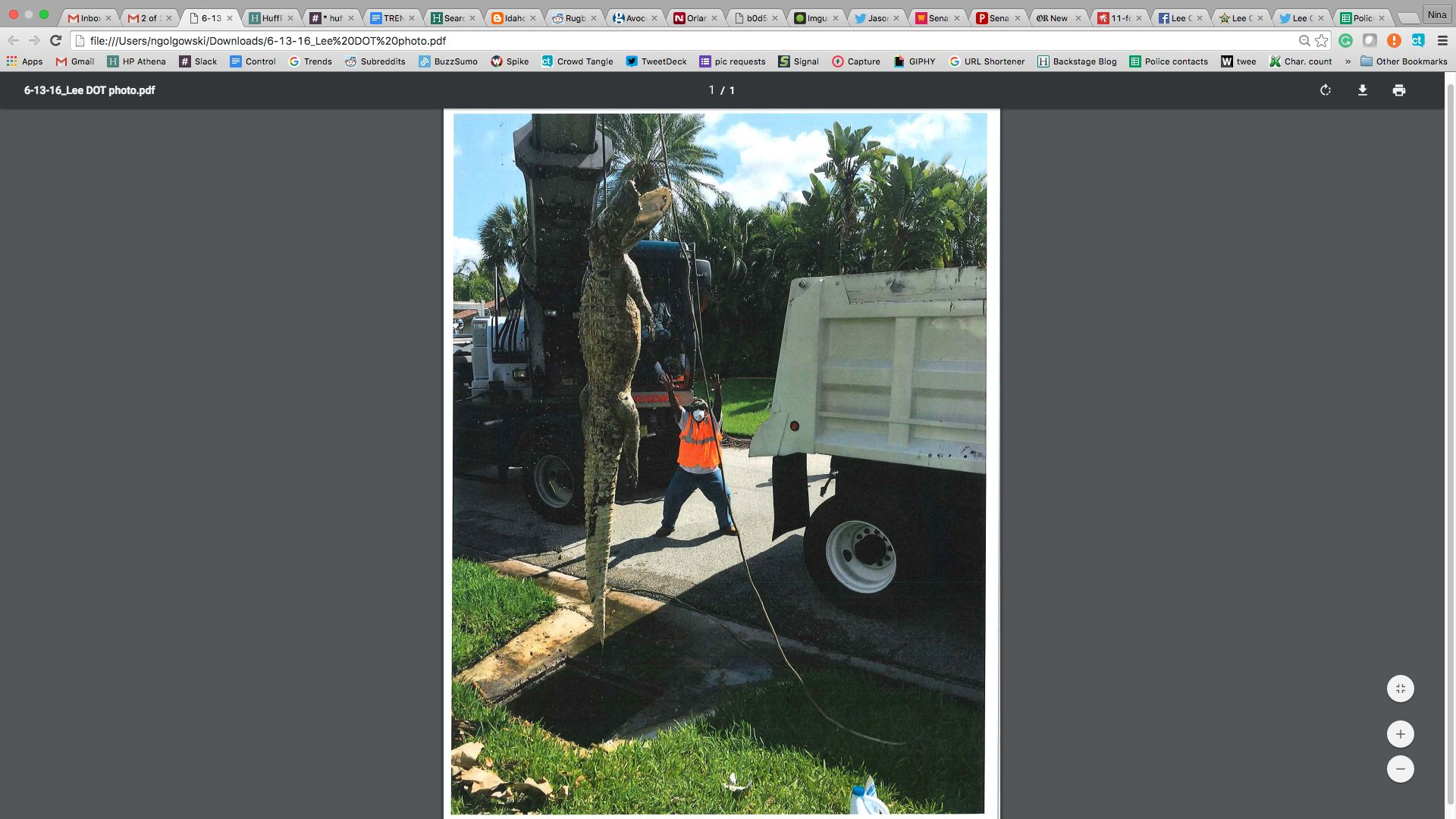 An 11-foot-long gator is seen being removed from a southwest Florida neighborhood on Monday.