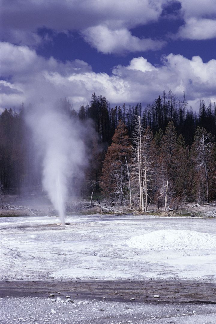 The fine comes a week after a tourist walked off a boardwalk surrounding Pork Chop Geyser, pictured, and fell into the b