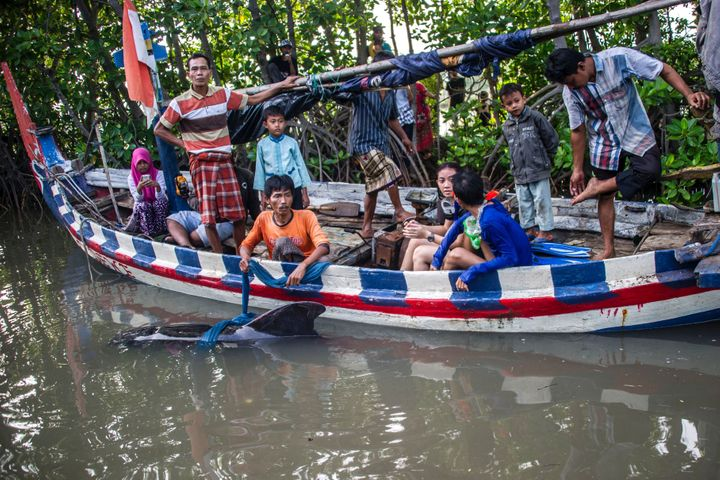 Indonesian environmental activists and local fishermen assist a disoriented short-finned pilot whale