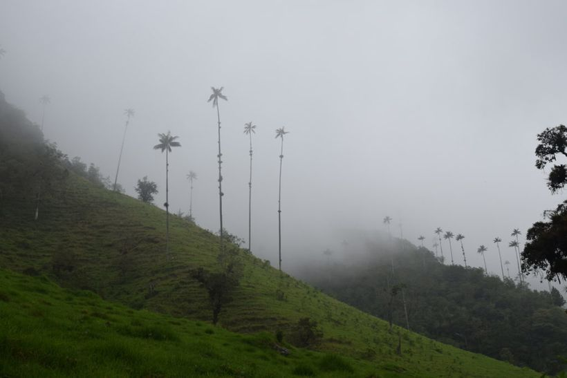 An early morning hike in Salento's Valley of Cocora