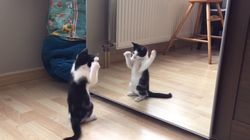 Kitten's Reaction To Seeing Itself In The Mirror For The First Time Is Totes