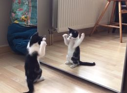 Kitten's Reaction To Seeing Itself In The Mirror For The First Time Is Totes Adorbs