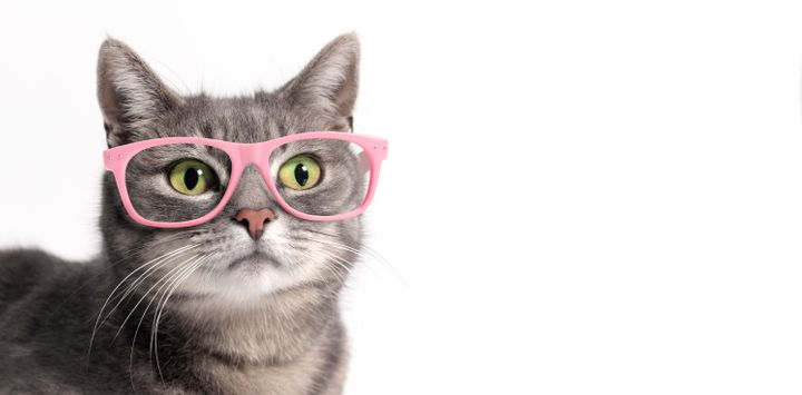 Does this cat even have bad eyesight, or she just trying to look hip?