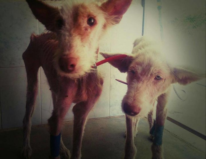 The two dogsa few days after their rescue.