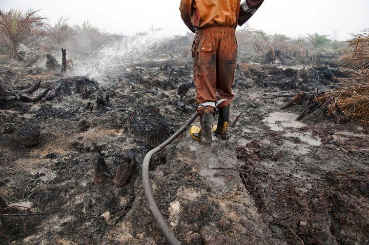 More than three environmental defenders were killed every week in 2015.