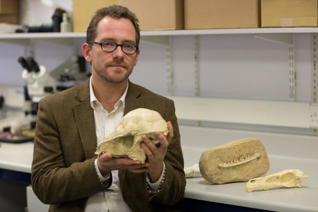Dinosaur Extinction Asteroid Almost Wiped Out Mammals Too Suggests New
