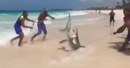 Shark Dies After Group Pull Creature From Sea For
