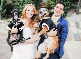 25 Photos Of Dogs At Weddings That Are Paws-itively Precious