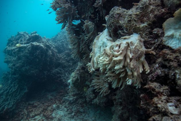 Soft coral decomposing and falling off the reef, captured by the XL Catlin Seaview Survey at Lizard Island...