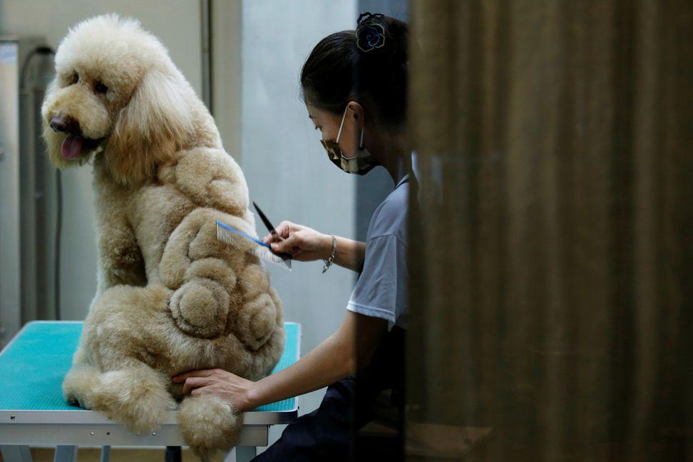 An employee trims a teddy bear.