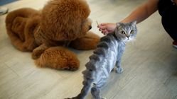 These Fur Styles For Cats And Dogs Are A Cut
