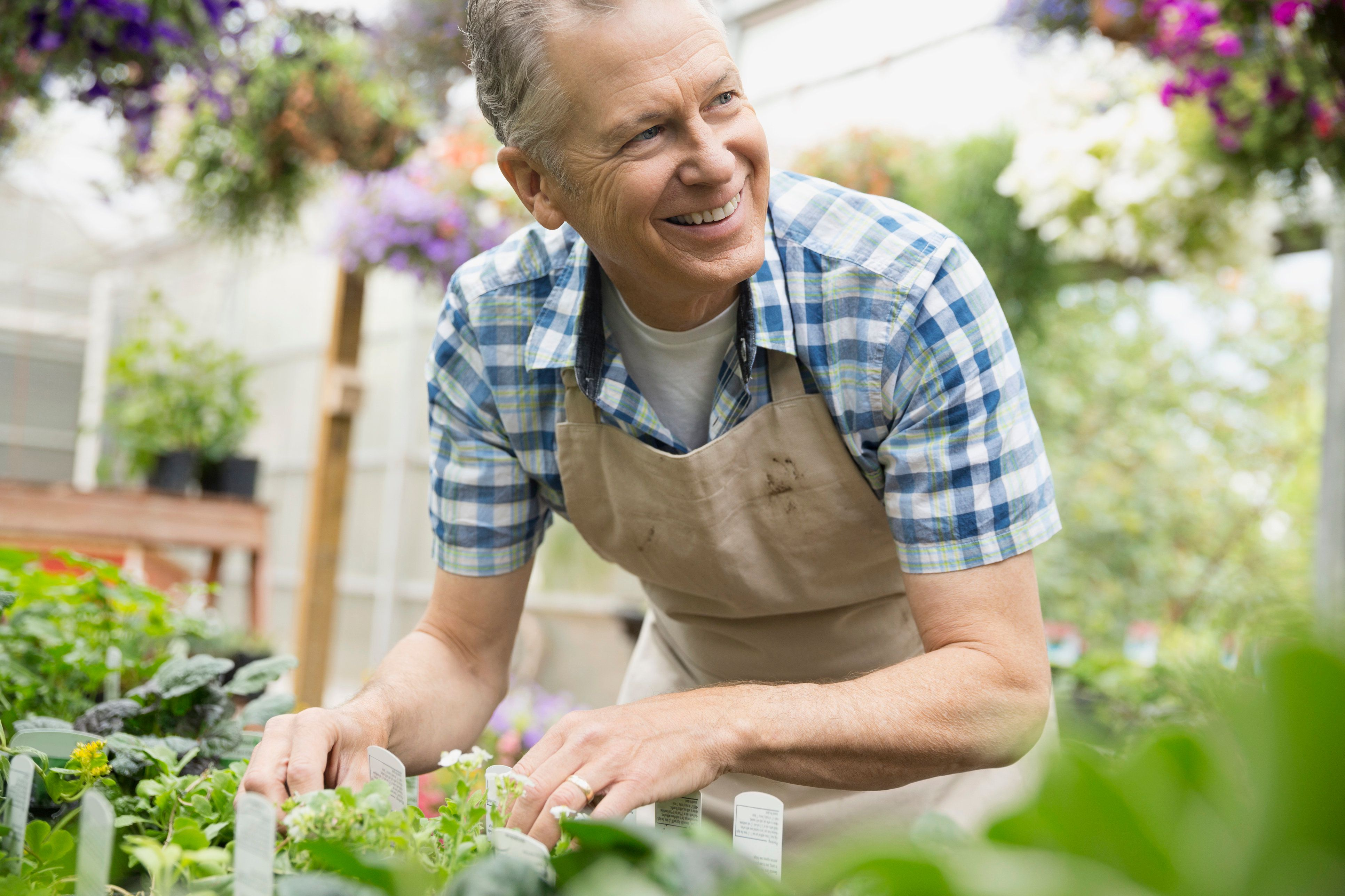 Smiling worker examining plant in plant nursery greenhouse