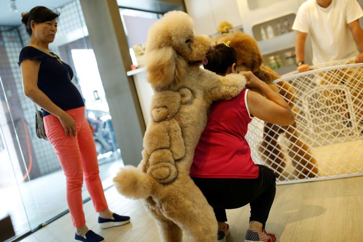 A woman plays with a dog with a teddy bear cut into its fur at a pet shop, in Tainan, Taiwan June 19, 2016.