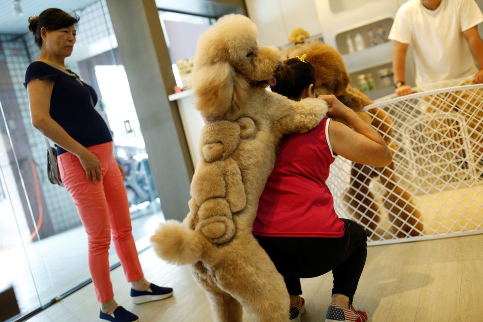 A woman plays with a dog with a teddy bear cut into its fur at a pet shop, in Tainan, Taiwan June 19,