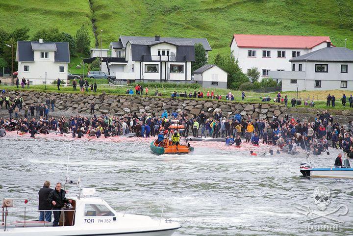 The carnage at Sandavágur.