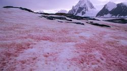 Pink Snow Looks Awesome, But Is Another Climate Change
