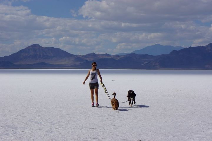 Road-tripping the USA with our dogs. Here we were in the Salt Flats in northern Utah.