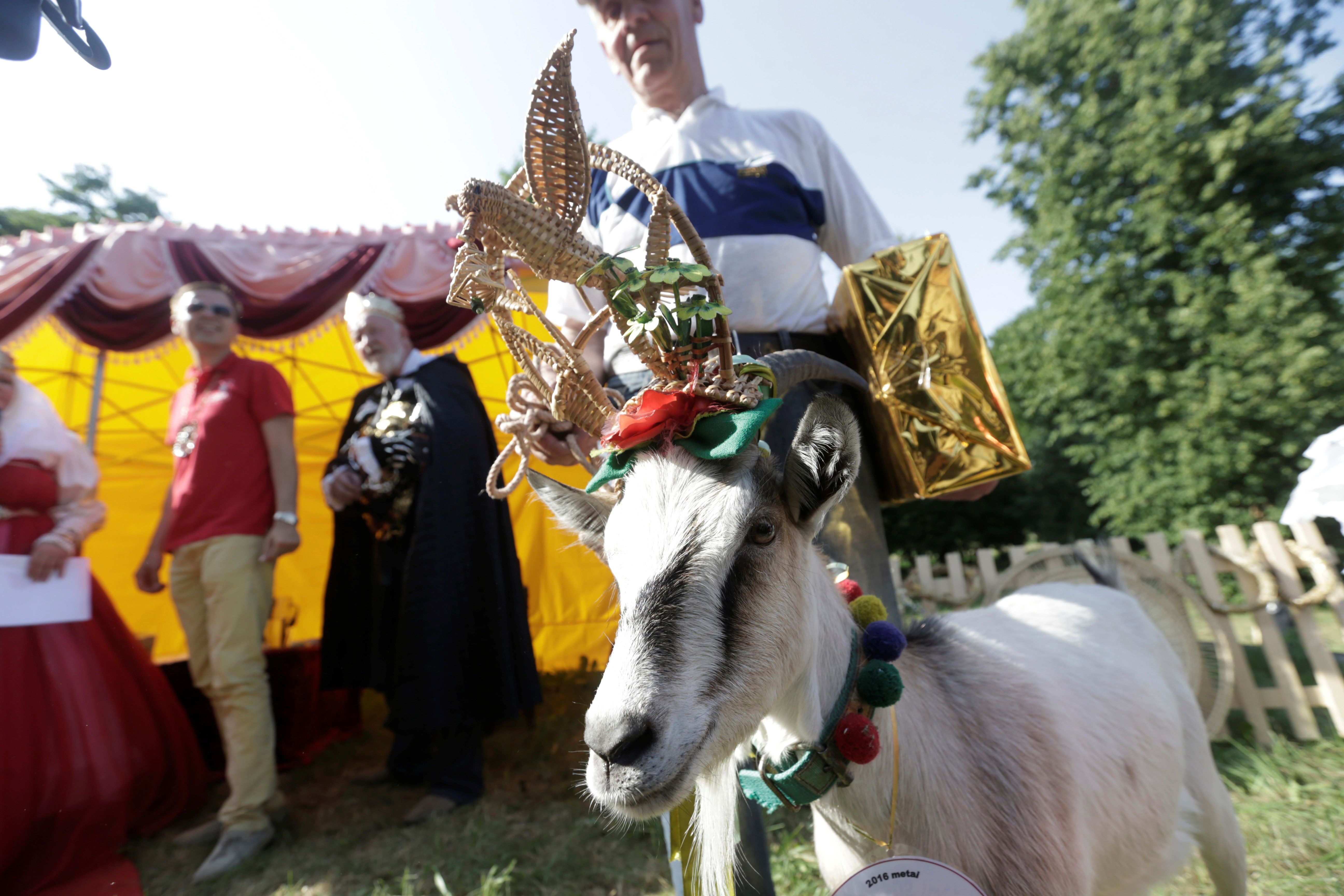 Goat owner Ferdinandas Petkevicius pose for a picture with goat winner Demyte, during goat beauty pageant in Ramygala, Lithuania, June 26, 2016. REUTERS/Ints Kalnins