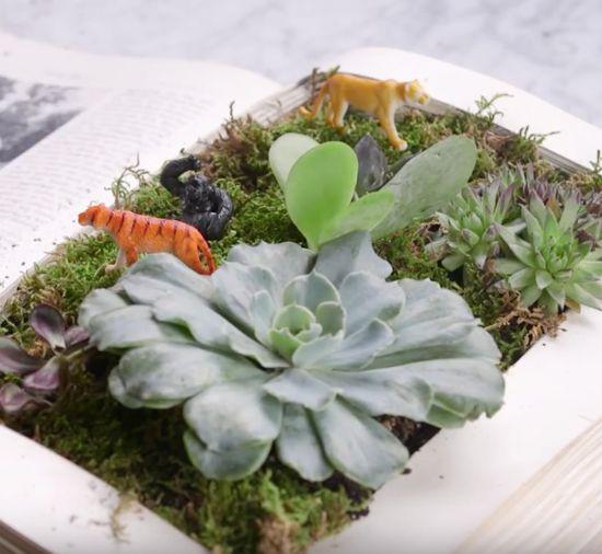 How to make a book terrarium