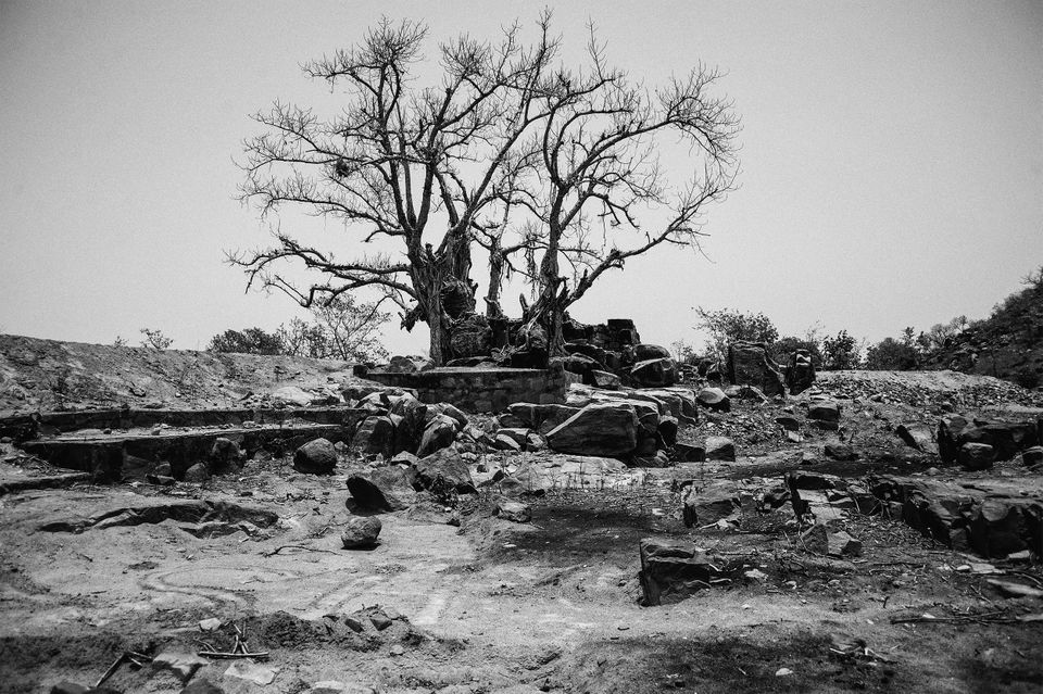 Dead trees haunt Bundelkhand's landscape, a stark reminder of the brutal affect that the drought has had on the land and its