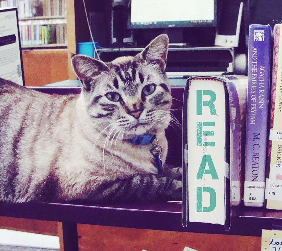 "Browser the library cat keeps in touch with his fans via his <a href=""https://www.facebook.com/browser.cat.3?pnref=story"" tar"