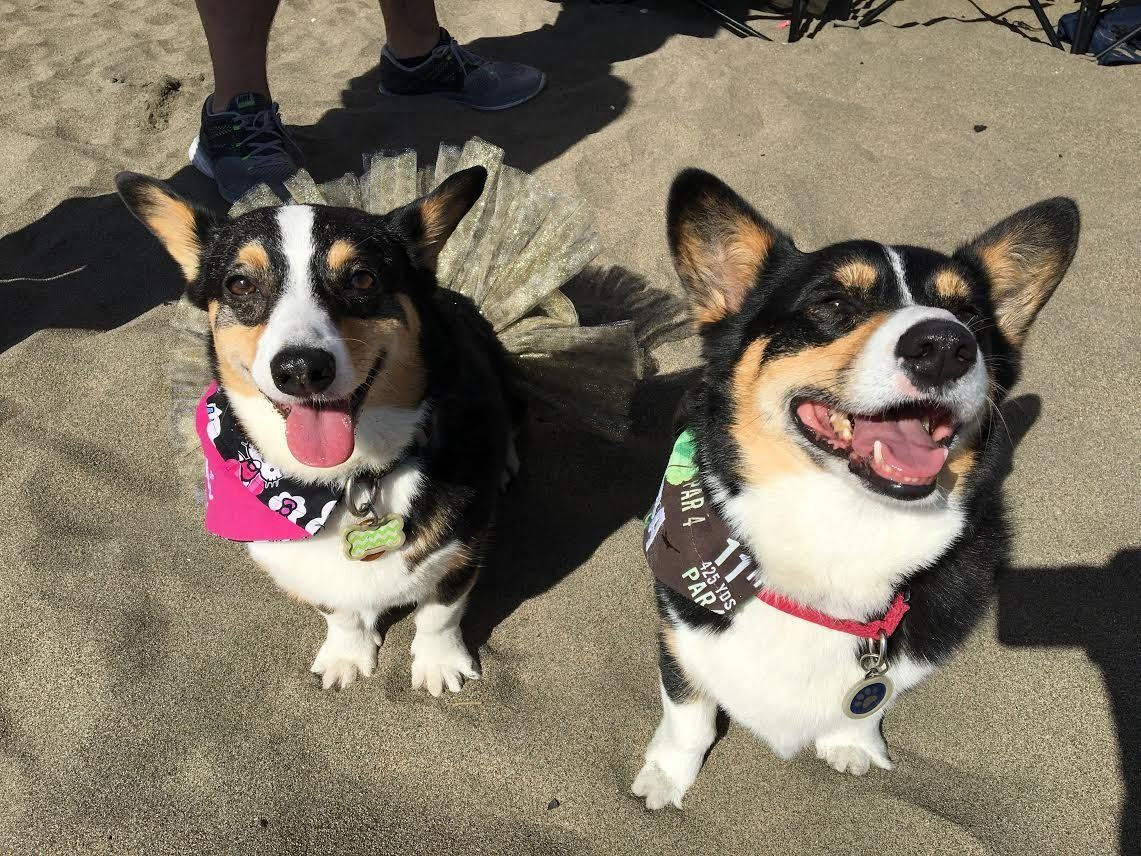 The event included a corgi race and costume contest.