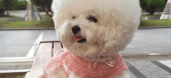 This Dog's Hair Is Totally Better Than Yours
