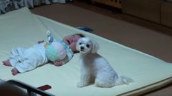 This Dog Can Silence A Baby's Cry In Seconds
