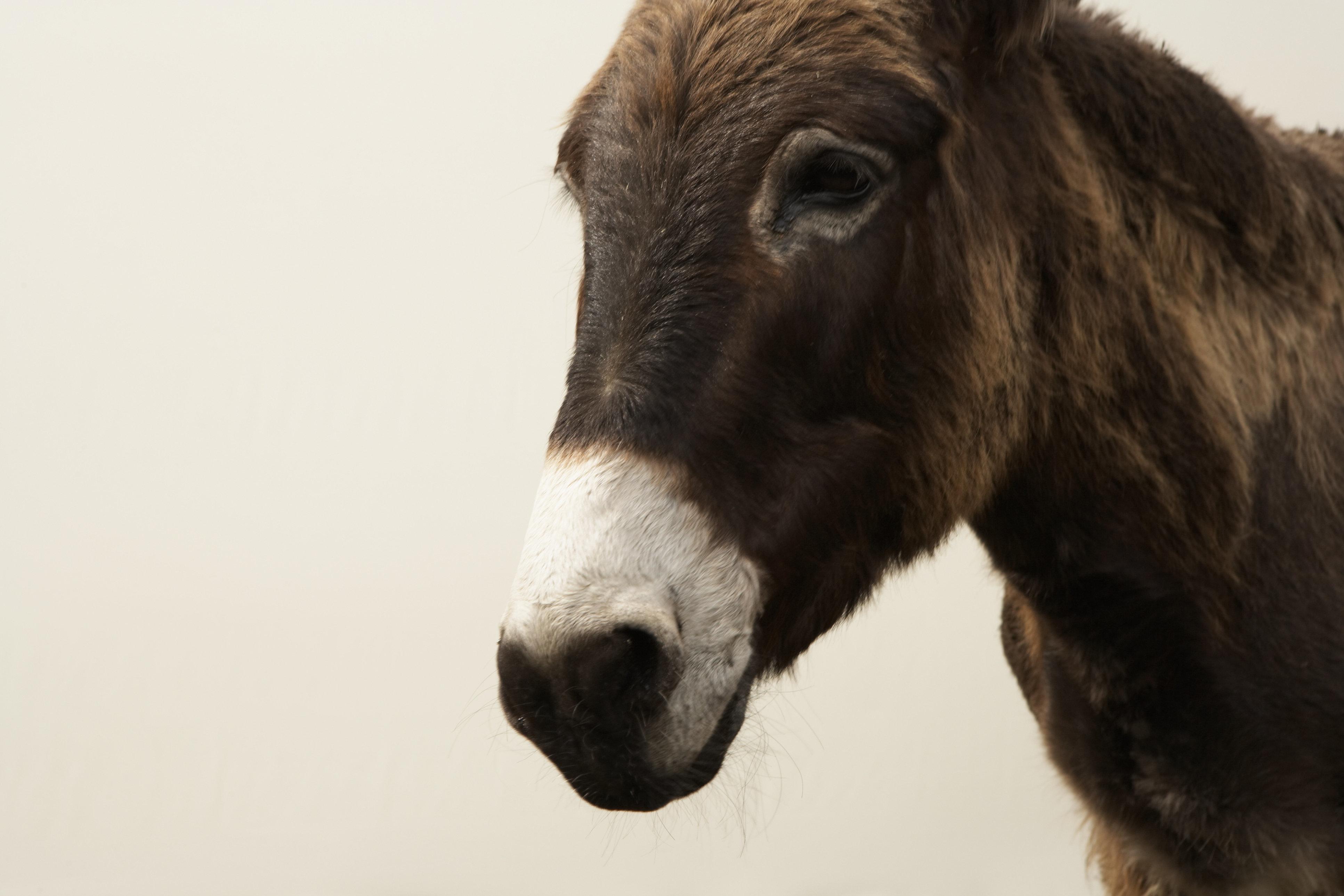 Is Donkey's Milk The Next Big Health