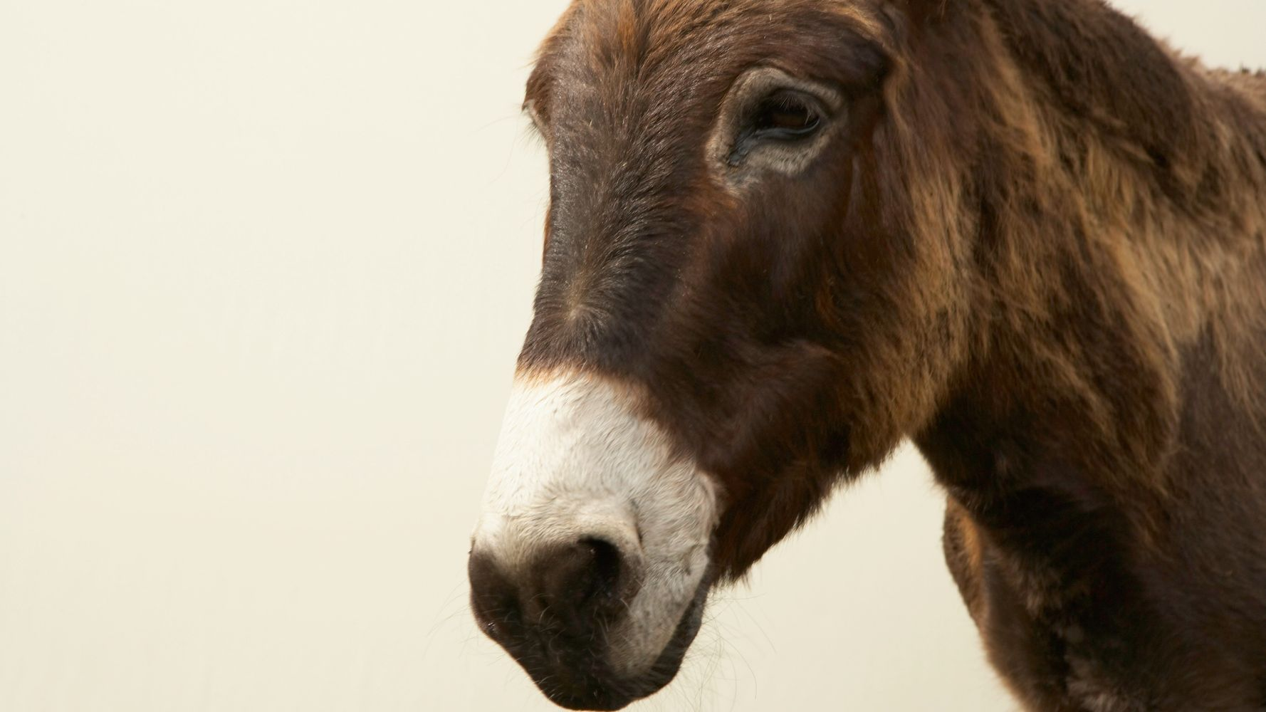 Donkey's Milk Might Sound Weird, But It Has Numerous Health