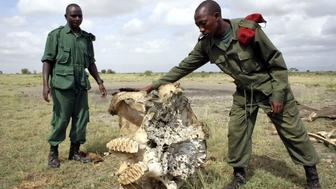 Members of an anti-poaching squad find an elephant skull in Arusha, Tanzania.
