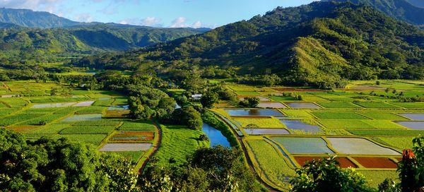 "Hanaleiis home to<a href=""http://www.kauai.com/hanalei-valley-lookout"" target=""_blank"">miles of taro fields</a> s"