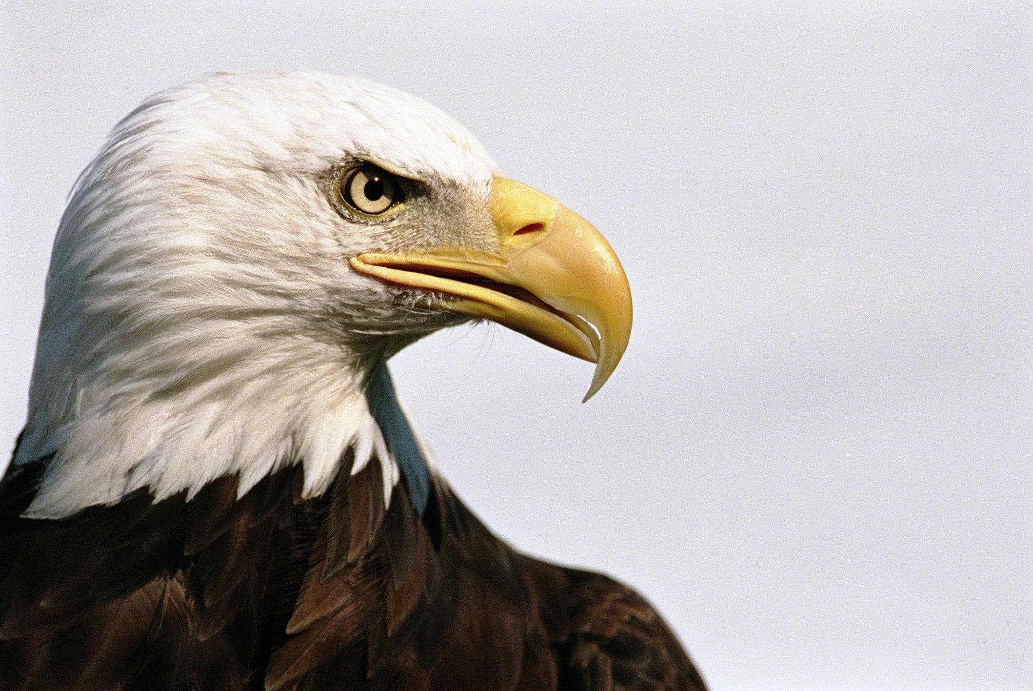 sharp shooting army veteran saves bald eagle stuck up a tree