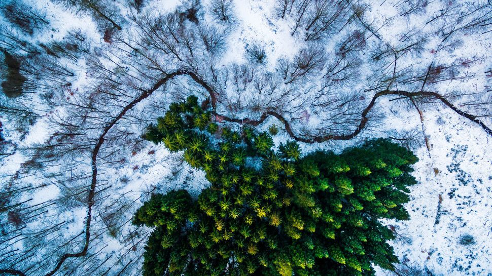 1st Prize Winner in Nature and Wildlife category. Kalbyris forest in Denmark.