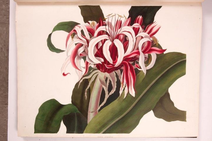 "The recently published <a href=""http://www.nybg.org/exhibitions/2014/flora-illustrata/"" target=""_blank"">Flora Illustrata</a>&"