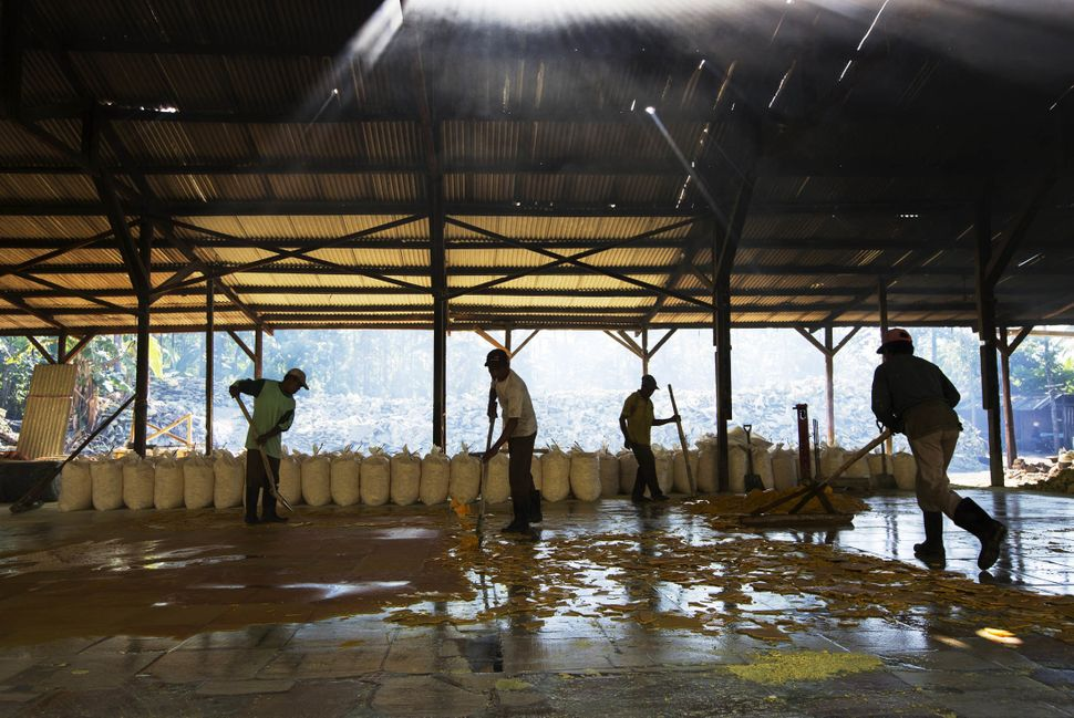Workers break up a sheet of sulfur from the ground for collection at a processing facility in Banyuwangi, East Java, Indonesi