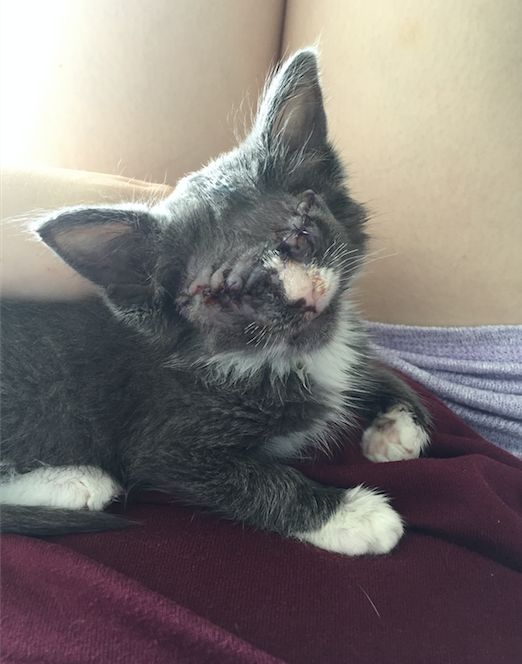 Braille, the blind cat who's now on the road to recovery.