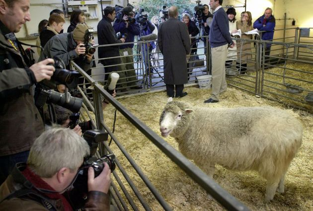 Dolly The Sheep Pushed Stem Cell Research Forward By 20 Years, Says