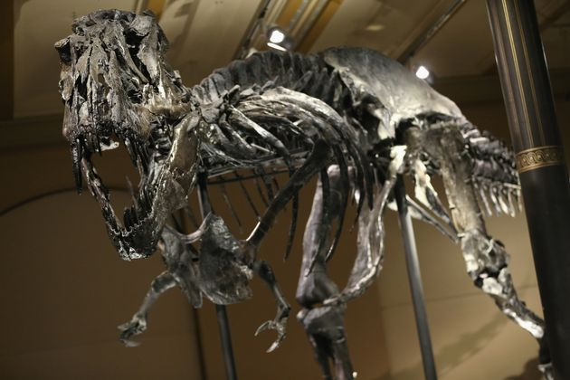 Dinosaur Extinction Started By Massive Volcanic Eruptions Before Asteroid