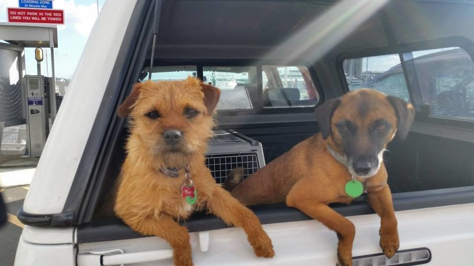 Half-siblings Piri (left) and Pai pose for the camera. Their dad, Jack, was also a ratter and conservation dog for more than