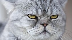 This Is How To Tell If Your Cat Is Aging