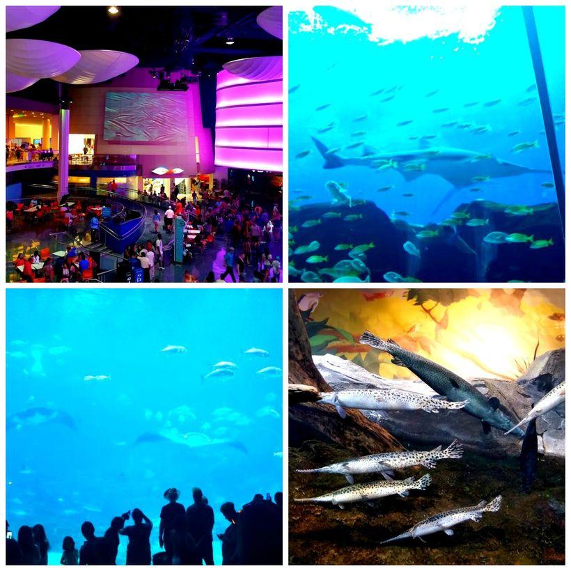 <strong>Georgia Aquarium</strong>