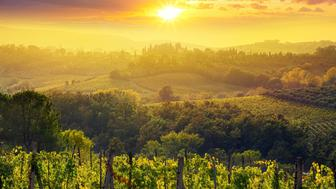 Vineyard and farmhouse in Tuscany at sunset.